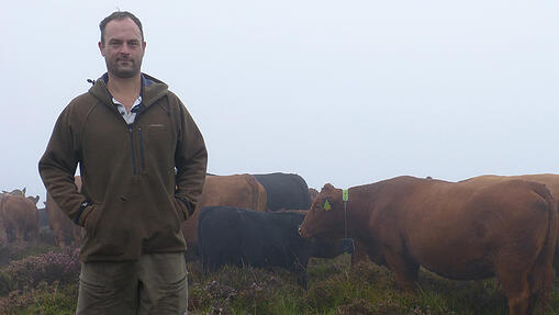 Highland farm grazes cattle unfenced with GPS collars